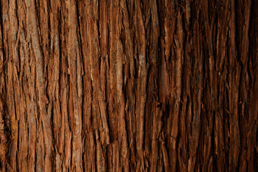 Woodland「Bark of cedar tree texture background」:スマホ壁紙(0)