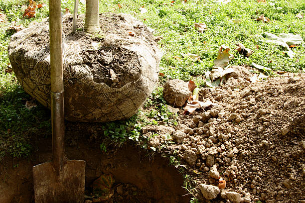 Shovel in freshly dug hole with tree nearby to be planted:スマホ壁紙(壁紙.com)