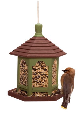 Cedar Waxwing「Outdoor bird feeder with cedar waxwing」:スマホ壁紙(3)