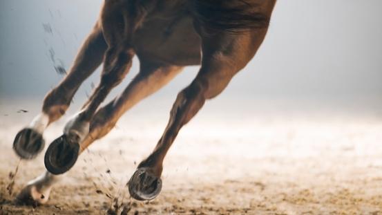 Horse「Legs of horse running」:スマホ壁紙(12)