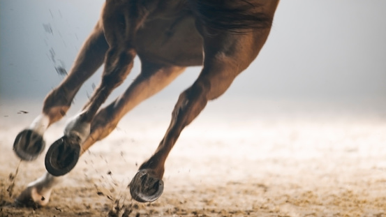 Working Animal「Legs of horse running」:スマホ壁紙(15)