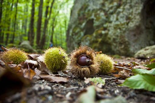 Chestnut - Food「Ischia island」:スマホ壁紙(15)