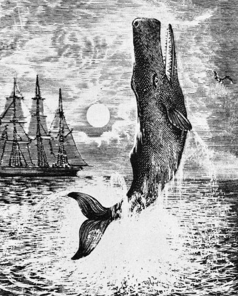 Illustration「Moby Dick」:写真・画像(17)[壁紙.com]