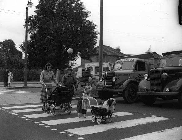 動物「Road Safety Dogs」:写真・画像(3)[壁紙.com]