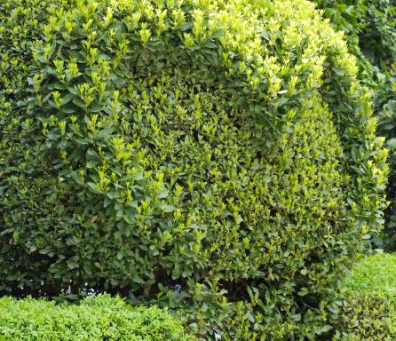 Prune「spheric bush」:スマホ壁紙(11)
