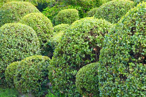 Prune「spheric bush」:スマホ壁紙(12)