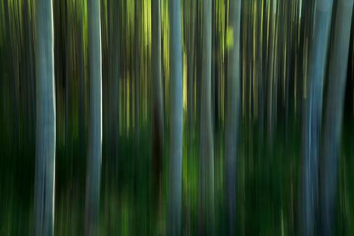 Defocus「Motion panning of poplar trees」:スマホ壁紙(10)