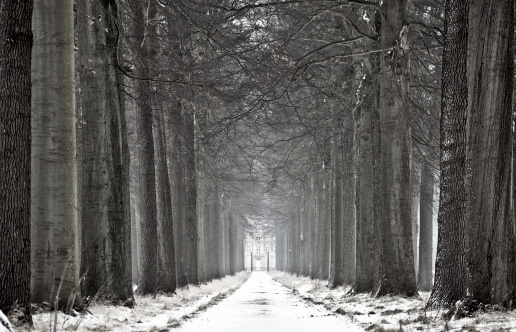 Avenue「Winter Road Lined with Trees」:スマホ壁紙(6)