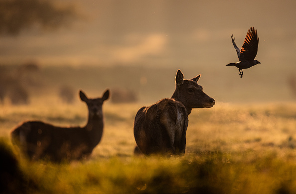 自然「Deer On An Autumn Morning At Ashton Court」:写真・画像(4)[壁紙.com]