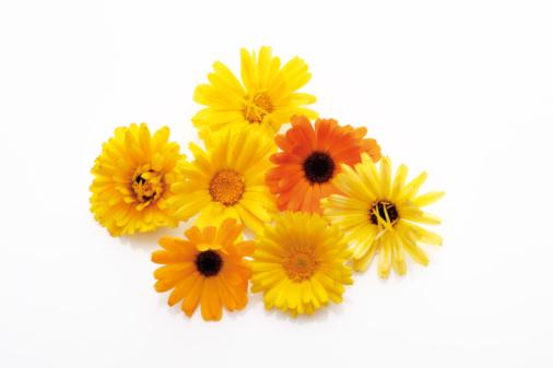 Marigold「Blossoms of calendulas (Calendula officinalis)」:スマホ壁紙(8)