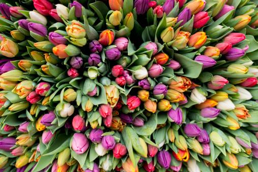 Market Stall「Blossoms of tulips」:スマホ壁紙(18)