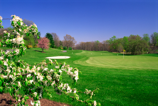 Sand Trap「Golf course」:スマホ壁紙(19)