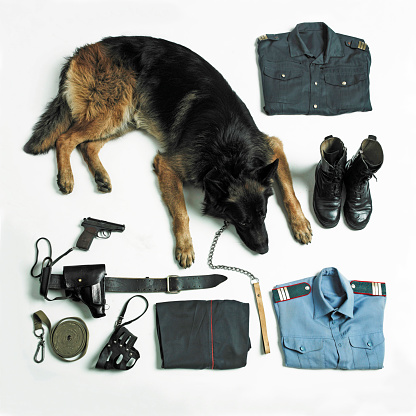 Belt「Organized police uniform and equipment with dog」:スマホ壁紙(8)