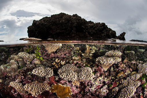 ソロモン諸島「Colorful reef-building corals grow on a reef in the Solomon Islands.」:スマホ壁紙(11)