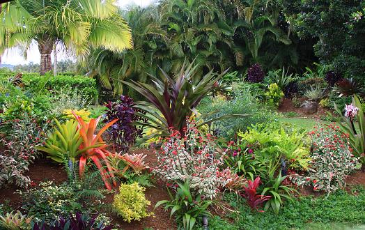 オアフ島「色鮮やかなリゾートの庭園でハワイ」:スマホ壁紙(15)