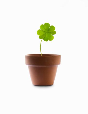 Clover Leaf Shape「4 leaf clover growing in a flower pot」:スマホ壁紙(18)