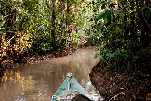 アマゾン熱帯雨林「Amazon Rainforest, Puerto Maldanado, Peru.」:スマホ壁紙(4)