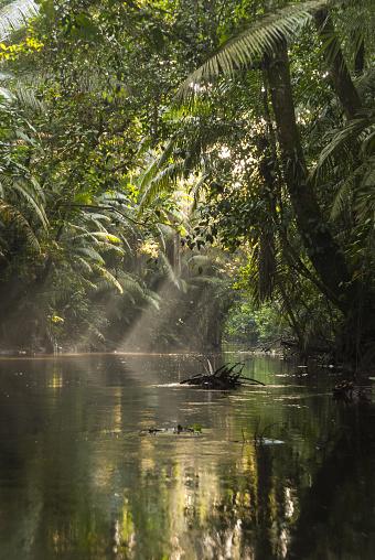 Amazon Rainforest「Amazon rainforest landscape」:スマホ壁紙(4)