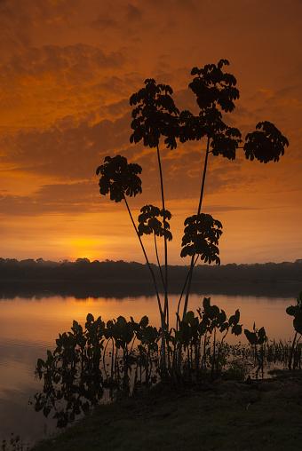 Amazon Rainforest「Amazon rainforest sunset」:スマホ壁紙(19)