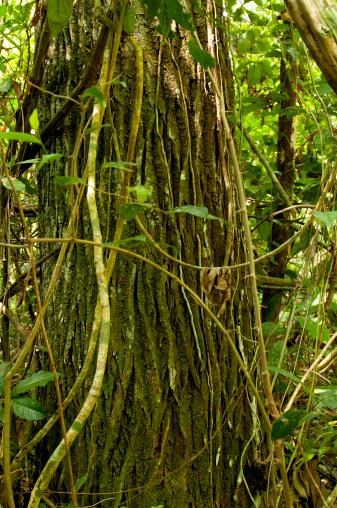Amazon Rainforest「Amazon rainforest」:スマホ壁紙(4)