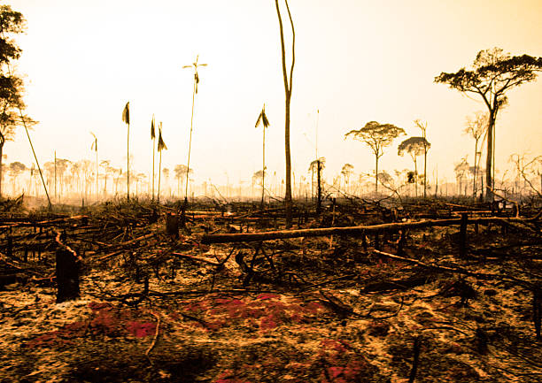 Amazon rainforest:スマホ壁紙(壁紙.com)