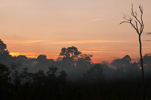 Amazon Rainforest「Amazon rainforest」:スマホ壁紙(0)