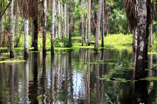 Amazon Rainforest「Amazon rain forest」:スマホ壁紙(17)