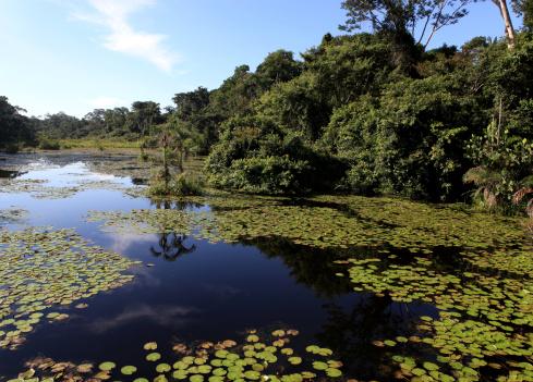 Amazon Rainforest「Amazon rain forest」:スマホ壁紙(11)