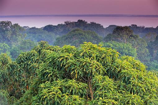 Amazon River「Amazon Rainforest Treetops」:スマホ壁紙(17)