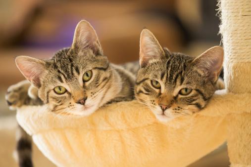 Kitten「Kittens sitting in cat tree」:スマホ壁紙(13)