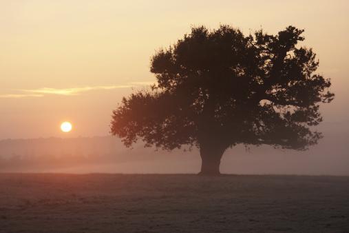 Single Tree「Pink sunrise beyond dark oak tree」:スマホ壁紙(8)
