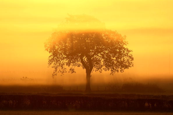 Dawn「First Morning Frosts Of Winter」:写真・画像(9)[壁紙.com]