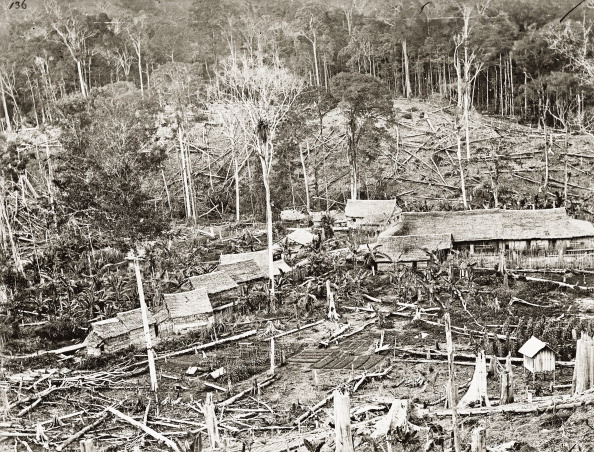 Coffee Crop「Coffee Plantation In Sarawak. Borneo Island. Malaysia. Photograph. About 1885.」:写真・画像(16)[壁紙.com]