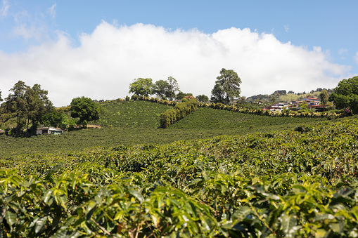 Focus On Background「Coffee plantation at the footsteps of Volcano Poas, Costa Rica」:スマホ壁紙(10)