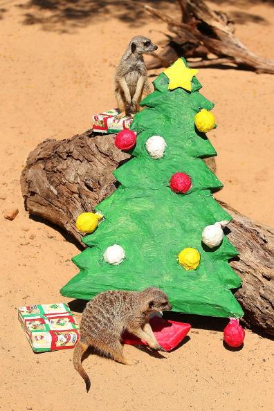 動物「Taronga's Animals Celebrate Christmas 2013」:写真・画像(8)[壁紙.com]