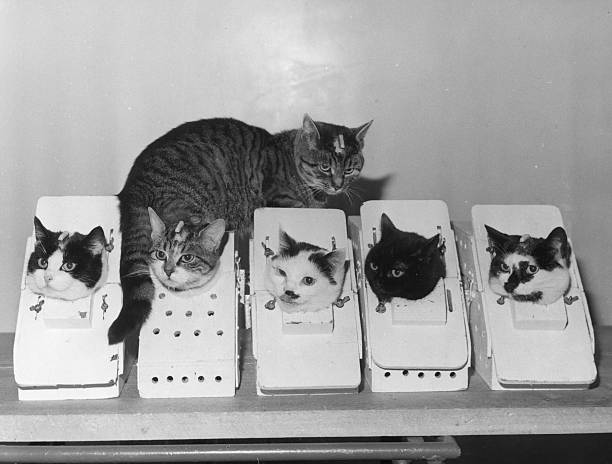 Laboratory Cats:ニュース(壁紙.com)