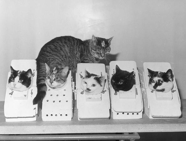 Domestic Cat「Laboratory Cats」:写真・画像(7)[壁紙.com]