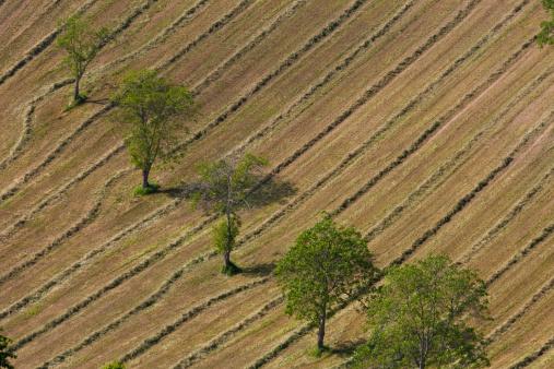 Tilt「Hay making, Marche, Italy」:スマホ壁紙(4)