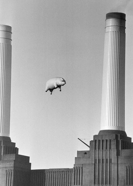 動物「Pink Floyd's Pig」:写真・画像(3)[壁紙.com]