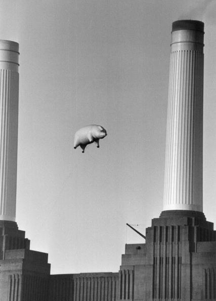 Animal「Pink Floyd's Pig」:写真・画像(19)[壁紙.com]