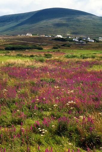 アキル島「Achill Island, Co Mayo, Ireland」:スマホ壁紙(19)