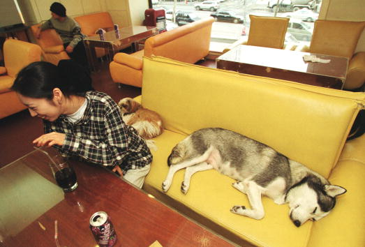Toilet「Canine Cuisine Criticized in South Korea」:写真・画像(8)[壁紙.com]