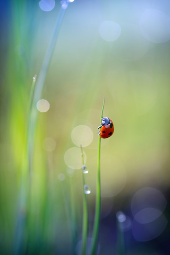 Ladybug「Ladybug clinging to blade of grass」:スマホ壁紙(18)
