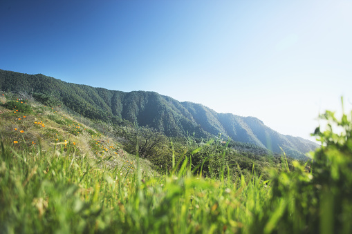 Focus On Background「View of mountains through grass, Tenerife」:スマホ壁紙(3)