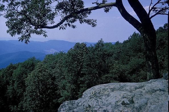 Mountain「Shenandoah National Park」:写真・画像(10)[壁紙.com]