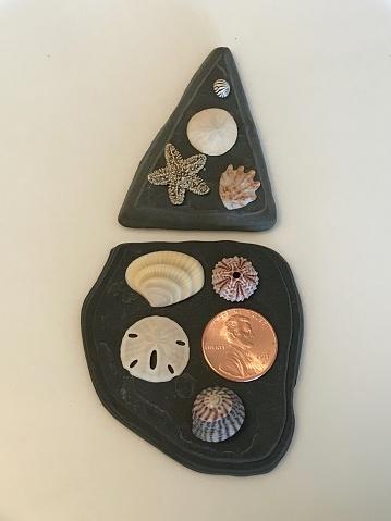 米国硬貨「Tiny sea shell collection」:スマホ壁紙(19)
