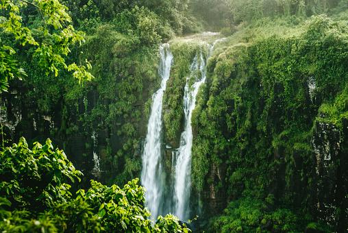 Rainforest「Iguazu Falls, Brazil-Argentina, Brazilian side」:スマホ壁紙(18)