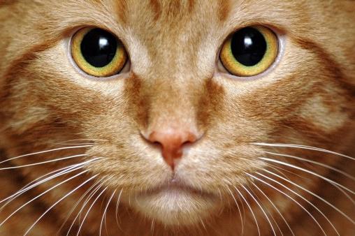 Animal Whisker「Intense Kitty」:スマホ壁紙(6)