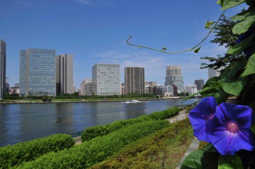朝顔「Sumida river and Tokyo skyline」:スマホ壁紙(1)