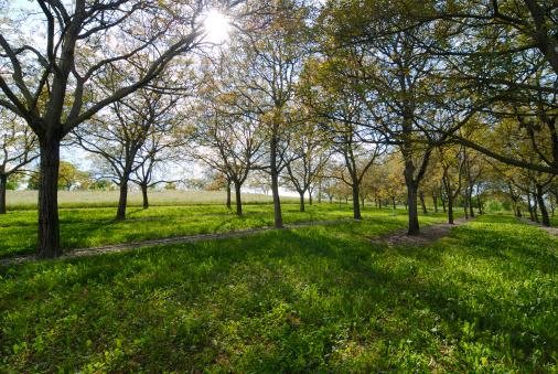 Grove「Walnut trees」:スマホ壁紙(3)